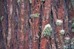 吠声近景结构树 库存照片