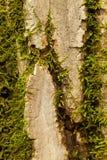 吠声青苔结构树 库存照片
