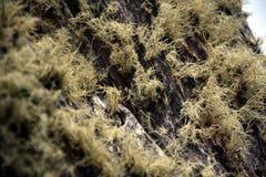 吠声青苔结构树黄色 免版税库存图片