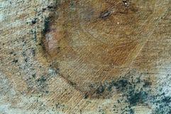 吠声,树,纹理 免版税图库摄影