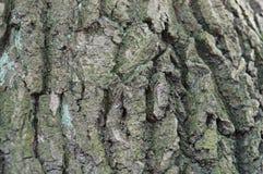 吠声,树,纹理 库存图片