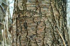 吠声,树,纹理 免版税库存照片
