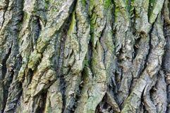 吠声,树,纹理 免版税库存图片