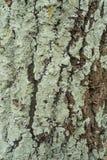 吠声绿色结构树 库存照片
