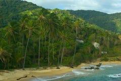 含沙海滩加勒比的palmtrees 免版税库存照片