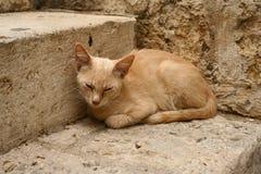 含沙的猫 库存图片