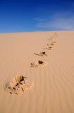 含沙的脚印 免版税库存图片