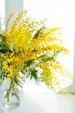 含羞草分支在一个玻璃花瓶的在白色背景,贺卡,大模型,问候的背景的窗口在母亲\ 's d 免版税库存照片