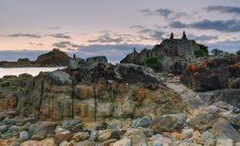 含羞草的岩石悬崖 库存照片