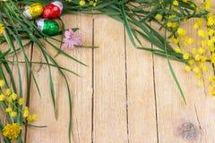 含羞草花和朱古力蛋的装饰构成为 库存照片