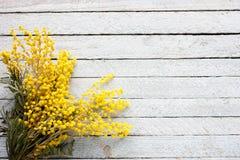 含羞草,在老木背景的春天开花的枝杈花束在蓝色木背景的 免版税库存照片