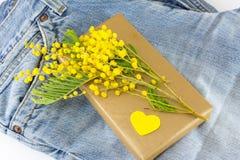含羞草pudica和一个被包裹的礼物在蓝色牛仔裤 免版税库存照片