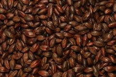 含麦芽大麦的巧克力 库存照片