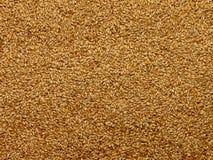 含麦芽的大麦 库存照片