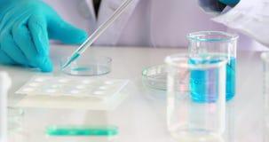吮蓝色液体的科学家从烧杯到实验的样品盘在实验室屋子里 股票录像