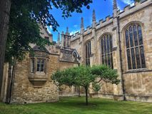 启发牛顿,剑桥的苹果树 库存照片