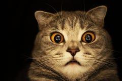 启示猫 库存图片