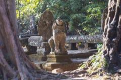 吴哥窟废墟在柬埔寨 免版税库存图片