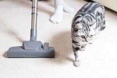 吸尘房子的女孩 明亮的地毯和轻的沙发 r 在地板上蔓延的猫 免版税图库摄影