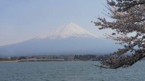 吸引力达可它mt rushmore南游人美国宽查看 富士和湖有樱花树的川口 股票视频