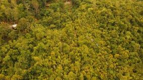 吸引力zipline在保和省,菲律宾海岛上的密林  影视素材