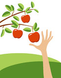 吸引的红色苹果 向量例证