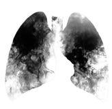 吸烟者在与拷贝空间的白色背景隔绝的` s肺 抽烟的杀害、概念与香烟和烟草 没有smok 图库摄影