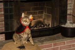 吸血鬼猫 库存图片