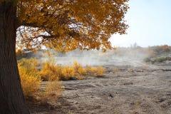 吹动沙漠沙子风冬天 免版税图库摄影