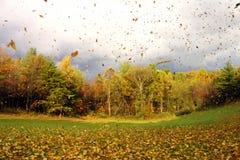 吹动秋天叶子 库存图片