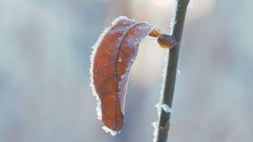 吹反对干叶子的风在称叶子的一冬天冷的天下来 影视素材