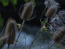吹在微风的小束的野花 免版税库存照片