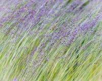吹在微风的草 免版税库存照片