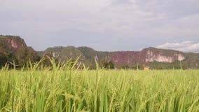 吹在米领域的风 影视素材