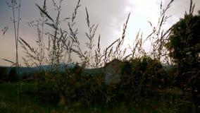 吹在草的风在黄昏 影视素材