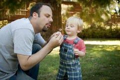 吹在蒲公英的公园的父亲和儿子 库存图片