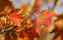 吹在风的五颜六色的秋叶在一个晴天 免版税库存照片