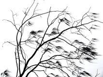 吹在风的树枝 免版税库存照片