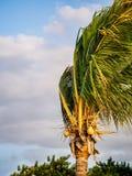 吹在风的棕榈树在黄昏期间 免版税库存图片