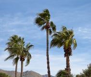 吹在风的棕榈树 库存照片