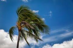 吹在风的棕榈树 免版税库存图片