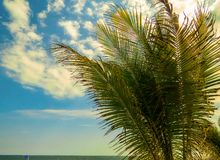 吹在风的热带棕榈树叶子 库存照片