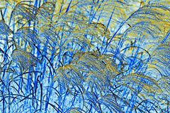 吹在风的自然抽象蒲苇 免版税库存照片