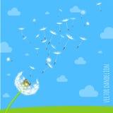 吹在风的蒲公英种子 免版税库存图片