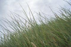 吹在风的高草 免版税库存照片