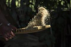 吹开从果壳的米 免版税库存照片