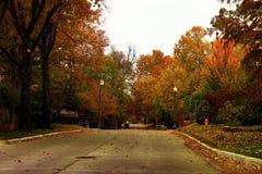 吹横跨邻里街道的精采多色秋天树在金黄小时 免版税库存图片