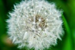 吹由风的植物 库存照片