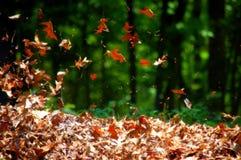 吹的叶子 图库摄影