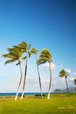 吹的夏威夷棕榈树风 免版税库存图片